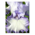 Postal del iris barbudo