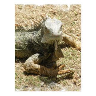 Postal del lagarto de la iguana