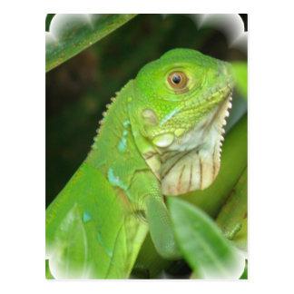 Postal del lagarto verde