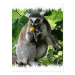 Postal del Lemur