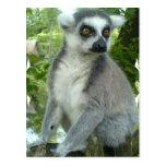 Postal del Lemur de Madagascar