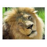 Postal del león