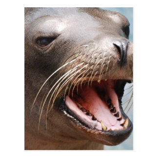 Postal del león marino de California