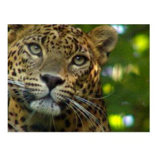 Postal del leopardo