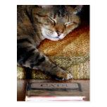 Postal del libro del sueño del gatito