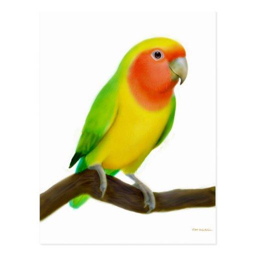 Postal del Lovebird