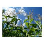 Postal del maíz de Indiana