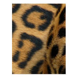 Postal del modelo de Jaguar