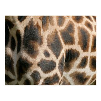 Postal del modelo del estampado de girafa