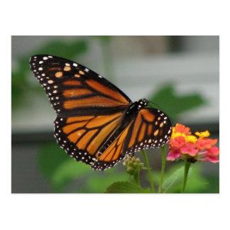 Postal del monarca y del Lantana