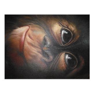 Postal del mono
