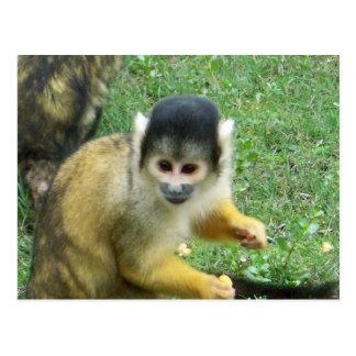 Postal del mono de ardilla