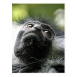 Postal del mono de Colobus de Rwanda