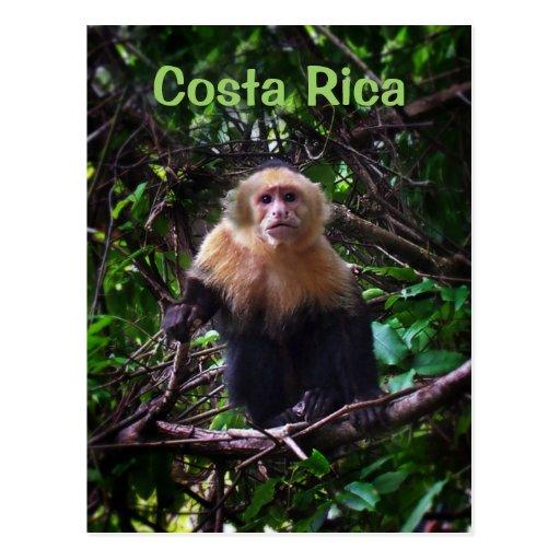 Postal del mono de Costa Rica