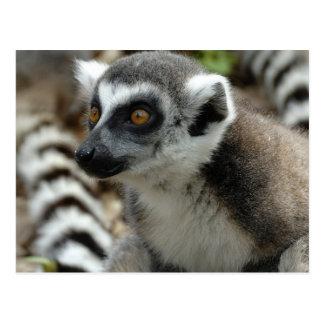 Postal del mono del Lemur
