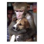 postal del mono y del perro