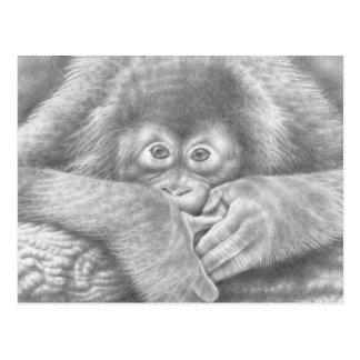 Postal del orangután del bebé
