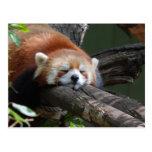 Postal del oso de panda el dormir