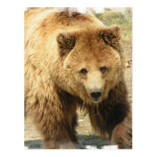 Postal del oso grizzly