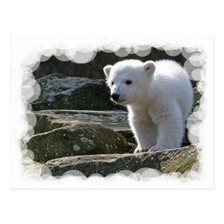 Postal del oso polar del bebé