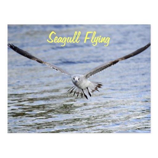 Postal del overwater del vuelo de la gaviota