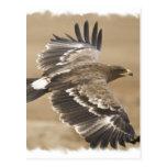 Postal del pájaro de Eagle del vuelo