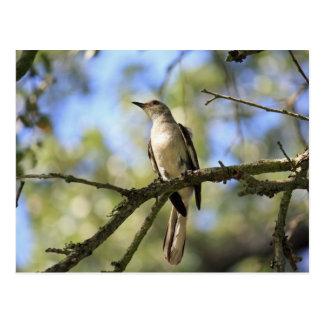 Postal del pájaro de estado de Tejas