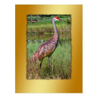 Postal del pájaro de la grúa de Sandhill