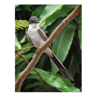 Postal del pájaro del Flycatcher