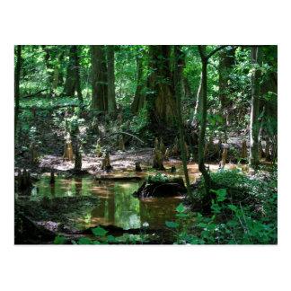 Postal del pantano de Cypress calvo