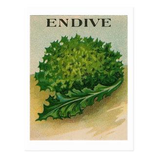 postal del paquete de la semilla de la endibia del