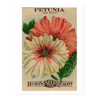 postal del paquete de la semilla de la petunia del