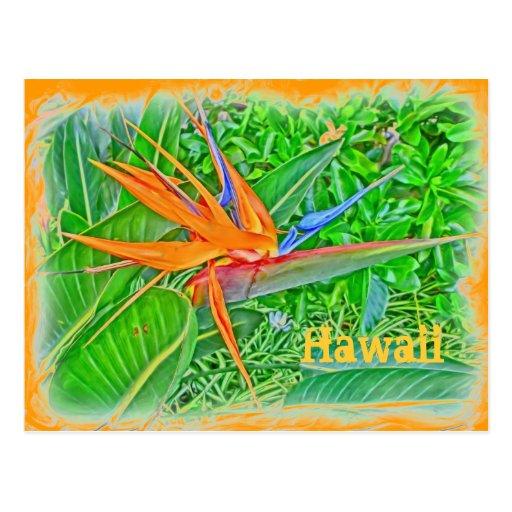 Postal del paraíso del pájaro de Hawaii
