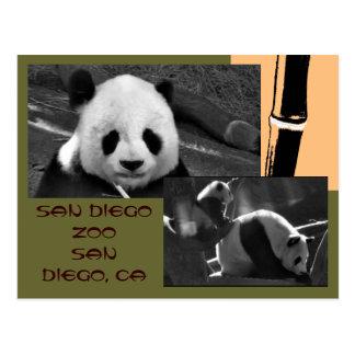 Postal del parque zoológico de San Diego de la pan