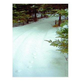 Postal del paseo de un invierno