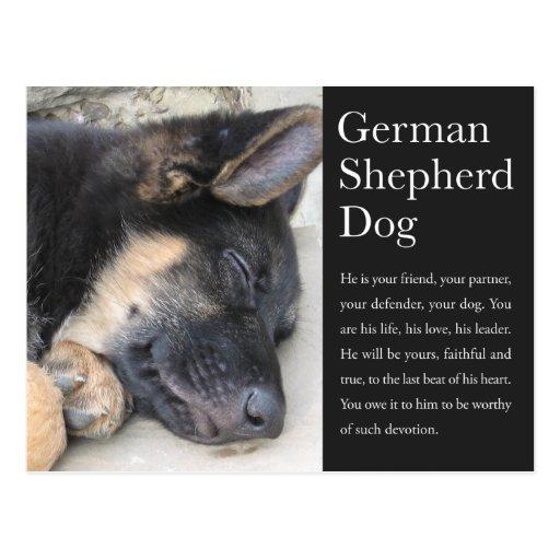 Postal del pastor alemán