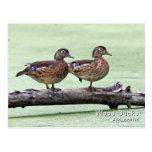 Postal del pato de madera (hembras)