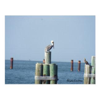 Postal del pelícano de la bahía móvil: Costa del G