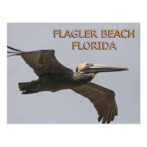 Postal del pelícano de la playa de Flagler