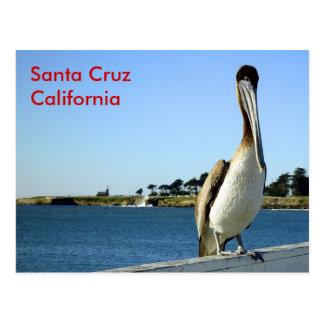 Postal del pelícano de Santa Cruz