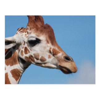 Postal del perfil de la jirafa