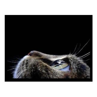 Postal del perfil del gato