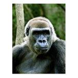Postal del perfil del gorila
