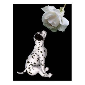 Postal del perrito dálmata y del rosa blanco
