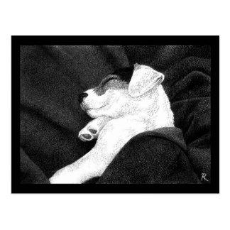 Postal del perrito de Jack Russell Terrier -