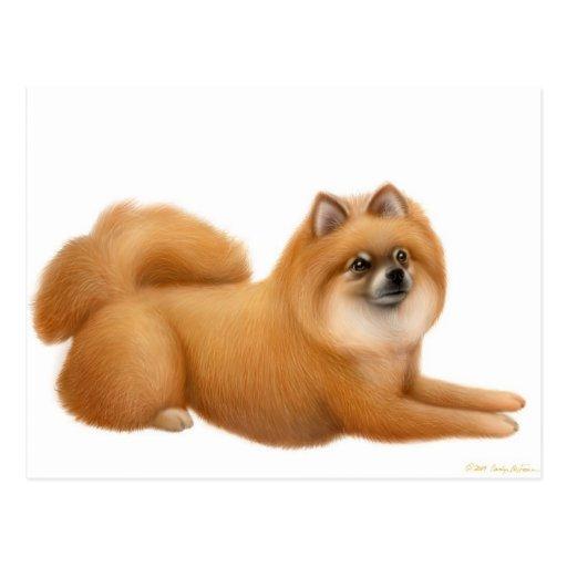 Postal del perrito de Pomeranian