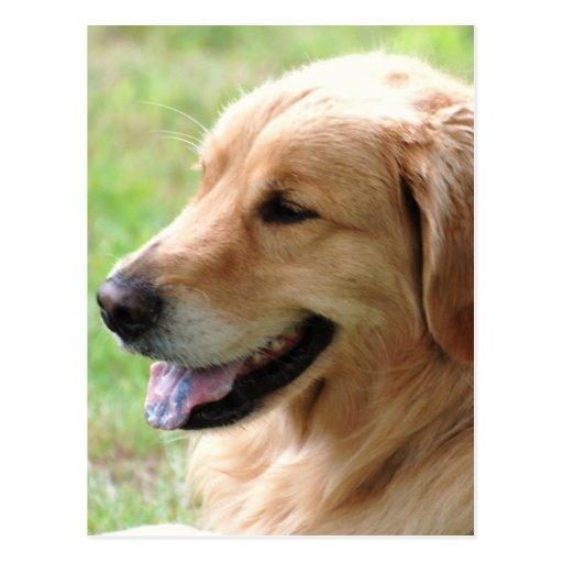 Postal del perrito del golden retriever