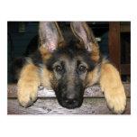 Postal del perrito del pastor alemán
