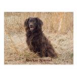 Postal del perro de aguas de Boykin
