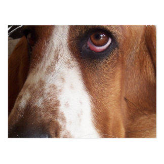 Postal del perro de Basset Hound